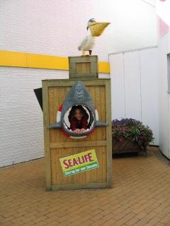 En farlig haj...