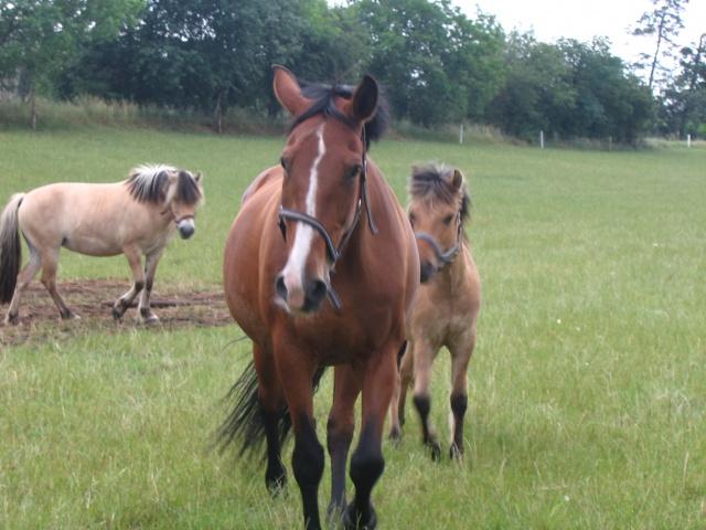 En flok heste på vores mark
