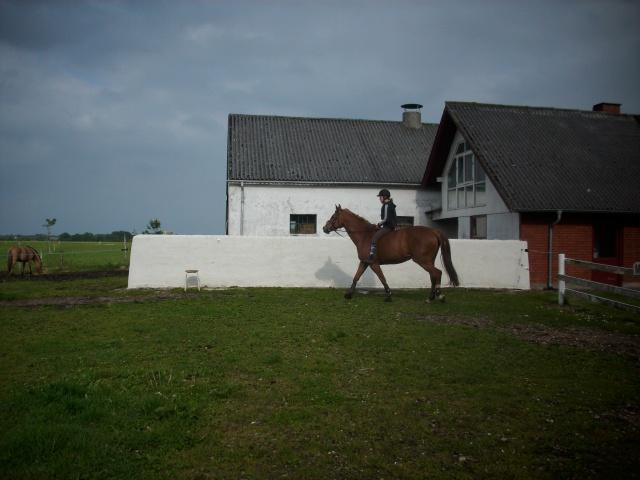 Pernille til hest på Caballino