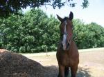 Hest i dejligt vejr