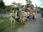 Heste i Jesperhus Blomsterpark